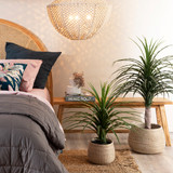 Single Yucca Plant [MUSLYUCCA21]