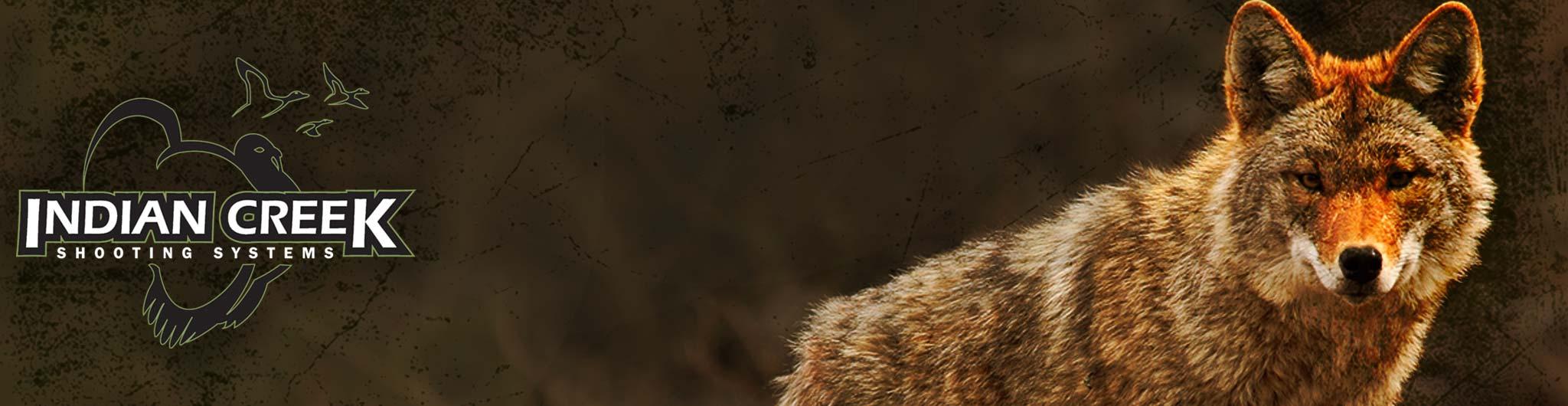 coyote-header-image.jpg