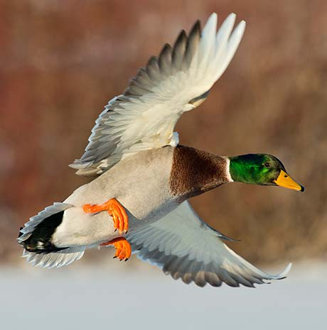 waterfowl-choke-tube.jpg