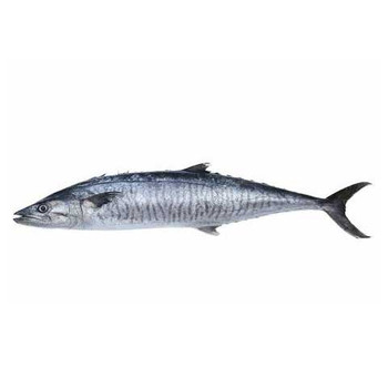 King fish small 1kg