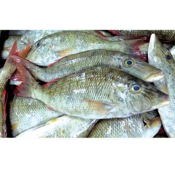 Soori Fish 1kg