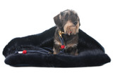 Cocoon Dog Beds