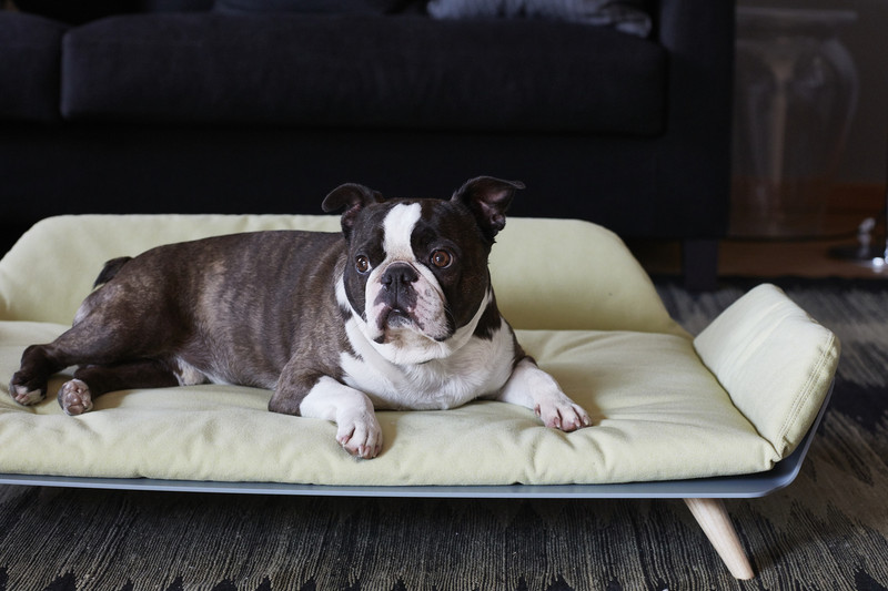 Dog Bed - Letto dayBed Ginger_Sleep_Reddot Design Award Winner 2015_Kalle Dog Model Lifestyle_www.hugoandotto.com