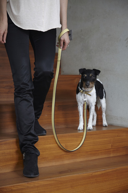 Dog Lead & Collar - Torino Lemon_Walk_Lifestyle_www.hugoandotto.com