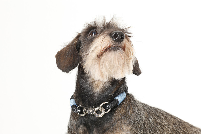 Hugo_&_Otto_Sark_Rope_Dog_Collar_Finnabr_Neck_jpeg
