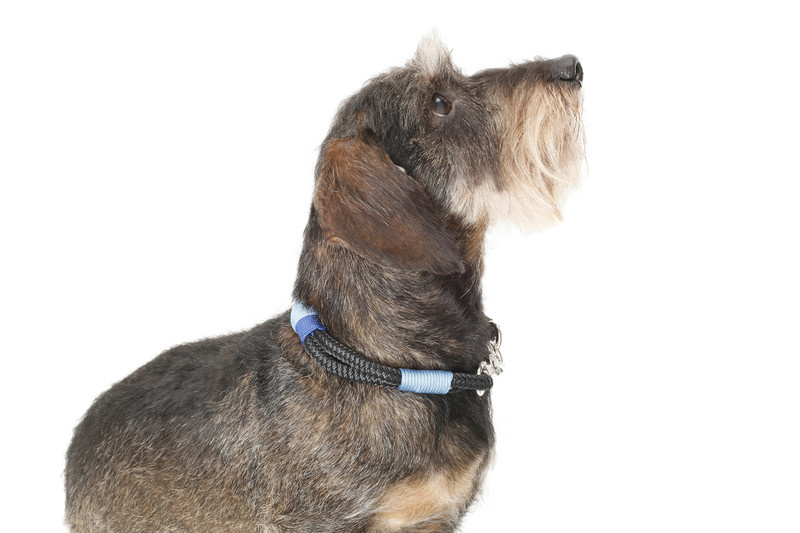 Hugo_&_Otto_Sark_Rope_Dog_Collar_Finnbar_Sideview_jpeg