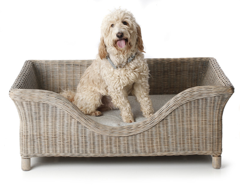 Hugo_&_Otto_Portreath_Raised_Rattan_Dog_Bed_Grey_Wash_Harewood_Dog_Cushion_Silver_Alfie_Lifestyle_www.hugoandotto.com