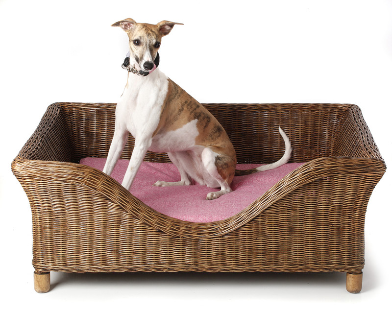 Hugo_&_Otto_Portreath_Raised_Rattan_Dog_Bed_Natural_Portreath_Dog_Cushion_Candy_Sybil_Lifestyle_www.hugoandotto.com