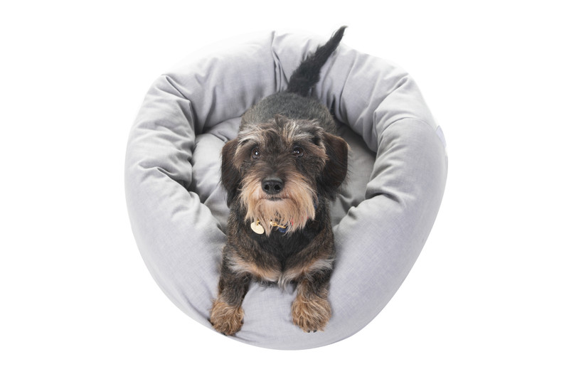 Hugo_and_Otto_Chester_Donut_dog_Bed_Stirling_Finnbar_Lifestyle_jpeg