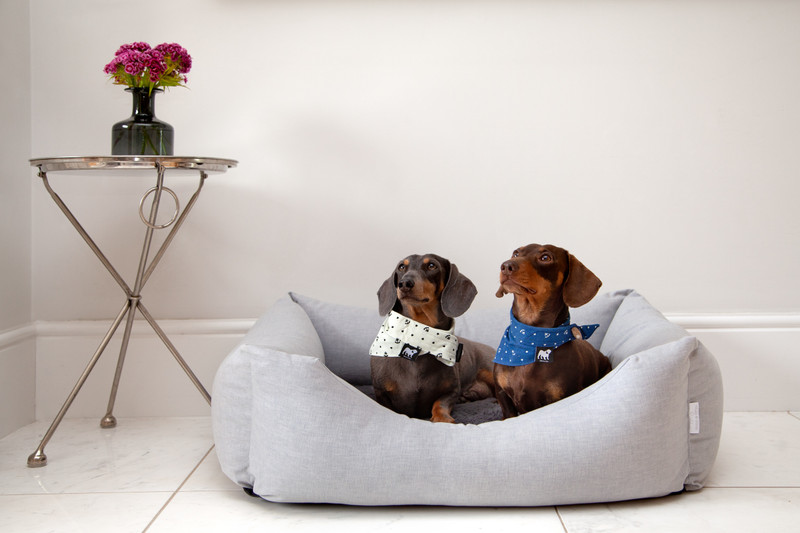 Hugo-and-Otto-Stretton-Dog-Bed-Ice-Storm-Reverse_Plain_Base_Cover_William_Bolly_jpeg