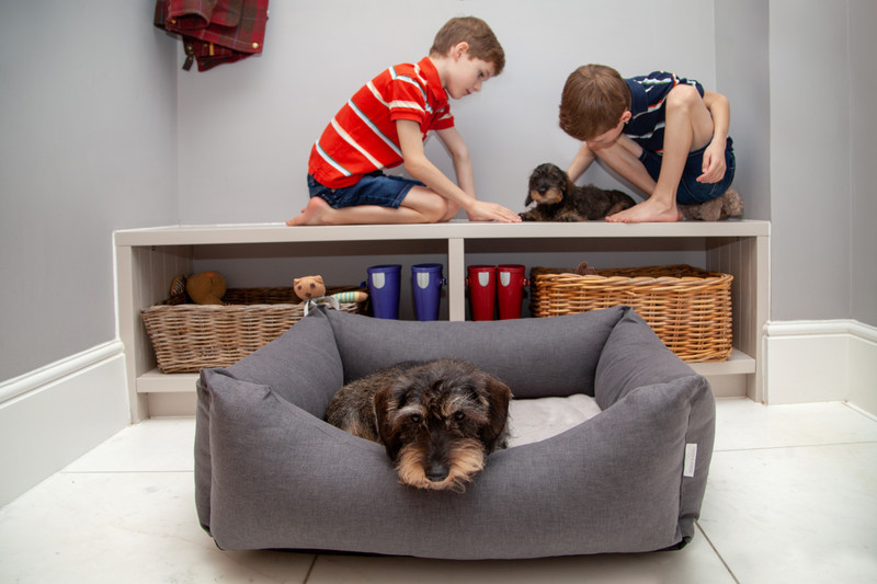 Hugo_and_Otto_Stretton_Dog_Bed_Graphite_with_memory_foam_Finnbar_MacBrigadoon_lifestyle_jpeg