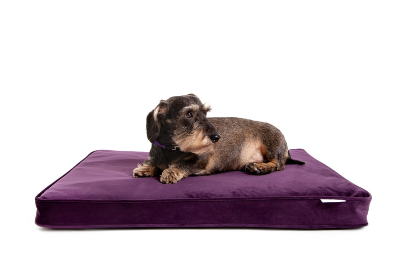 Hugo_and_Otto_Wessex_Memory_Foam_Dog_Bed_Finnbar_MacBrigadoon_Lifestyle_jpeg