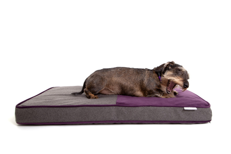 Hugo_&_Otto_Winchester_Memory_Foam_Dog_Bed_Aubergine_Anthracite_Finnbar_MacBrigadoon_Sleepy_jpeg
