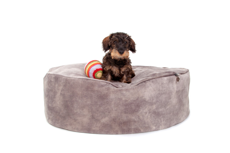Hugo_and_Otto_York_Sitting_Pretty_Cushion_Dog_Bed_Taupe_Lifestyle_Ottilie_Lettuce_png