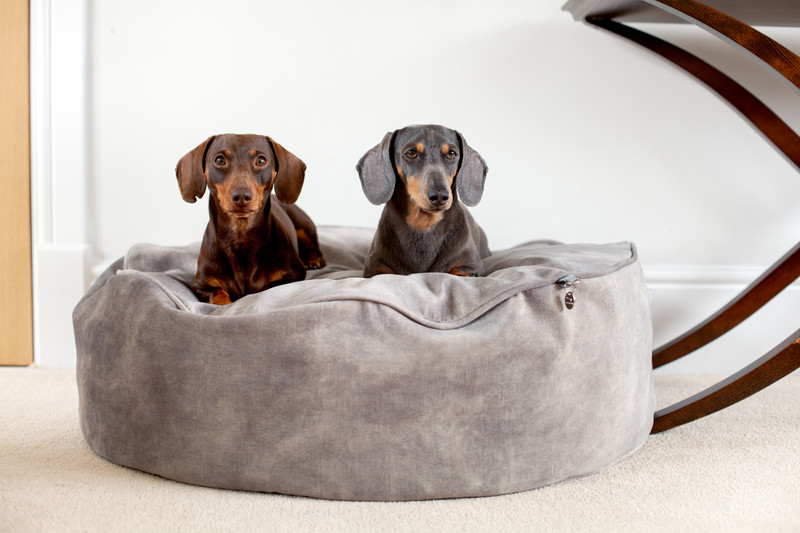 York_Sitting_Pretty_Cushion_Dog_Bed_Taupe_Lifestyle_William_Bolly_png