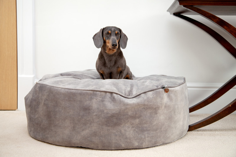 York_Sitting_Pretty_Cushion_Dog_Bed_Taupe_Lifestyle_William_png