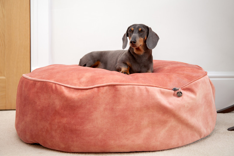 York_Sitting_Pretty_Cushion_Dog_Bed_Rose_Lifestyle_William_png