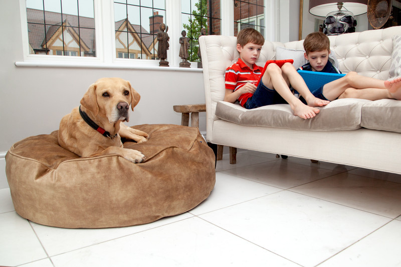 York_Sitting_Pretty_Cushion_Dog_Bed_Burnish_Lifestyle_Ralphy_Jack_Harry_png