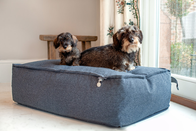 Lincoln_As_Nice_As_Pie_Cushion_Dog_Bed_Lifestyle_Finnbar_Ottilie_png