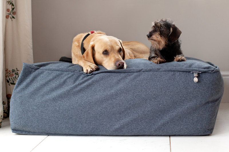 Lincoln_As_Nice_As_Pie_Cushion_Dog_Bed_Lifestyle_Finnbar_Hunter_png