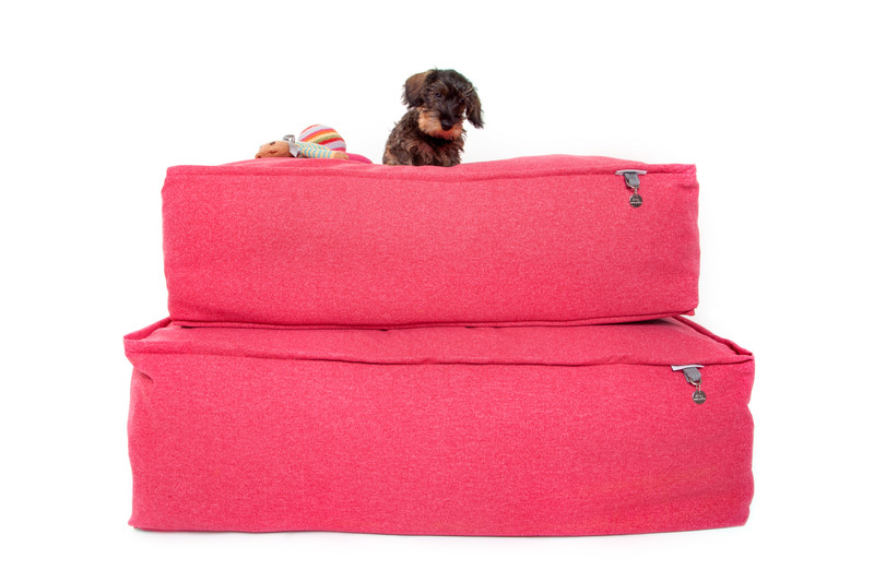 Lincoln_As_Nice_As_Pie_Cushion_Dog_Bed_Cerise_memory_foam_Lifestyle_png