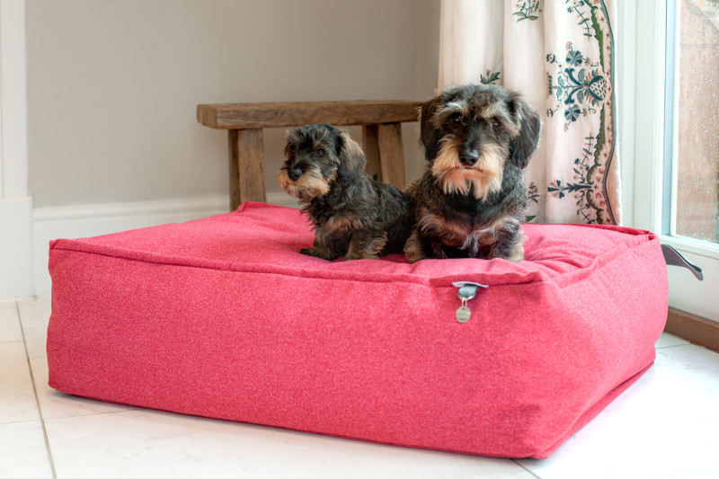 Lincoln_As_Nice_As_Pie_Cushion_Dog_Bed_Cerise_memory_foam_Lifestyle_Ottilie_Finnbar_png