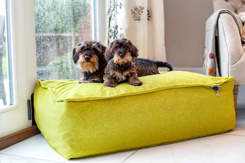 Lincoln_As_Nice_As_Pie_Cushion_Dog_Bed_Citron_Lifestyle_Finnbar_Ottilie_png