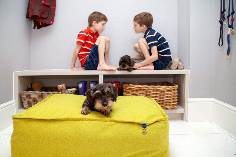 Lincoln_As_Nice_As_Pie_Cushion_Dog_Bed_Citron_Lifestyle_Finnbar_Ottilie_Jack_Harry_png