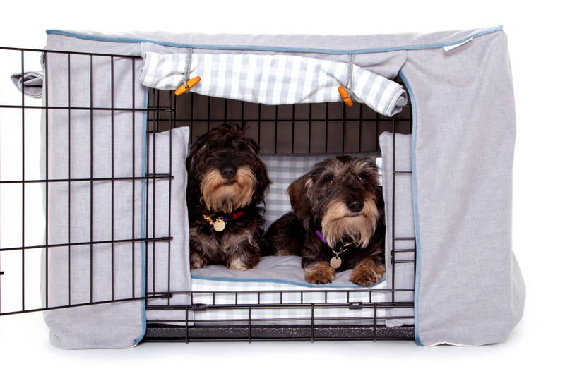 Hugo_and_Otto_Great_Tew_Cosy_Dog_Collection_Fully_Dressed_Lifestyle_Ottilie_Finnbar_jpeg