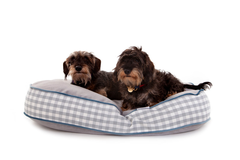 Hugo_and_Otto_Sarsden_Oval_Dog_Bed_Cushion_Lifestyle_OttilieLettuce_Finnbar_jpeg