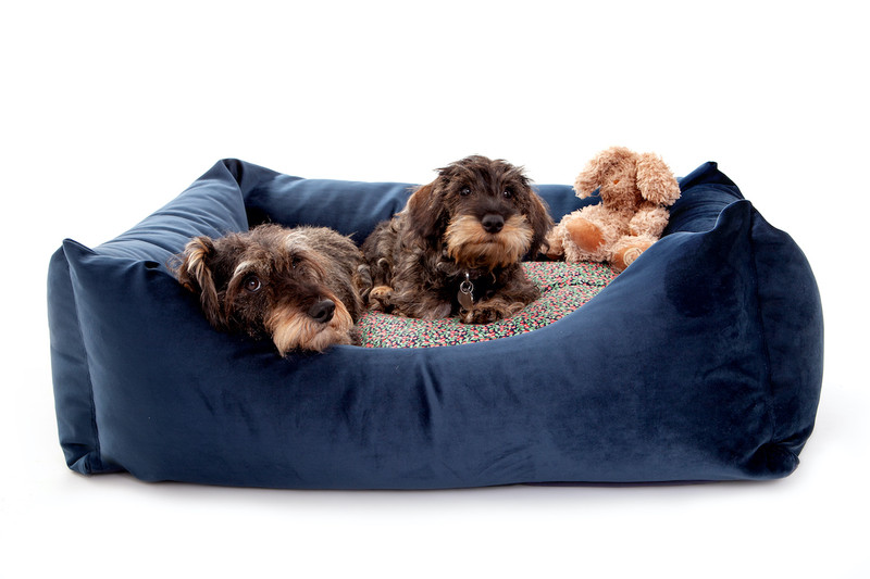 Sissinghurst_Snoozeworthy_Scooped_Front_Dog_Bed_lifestyle_png