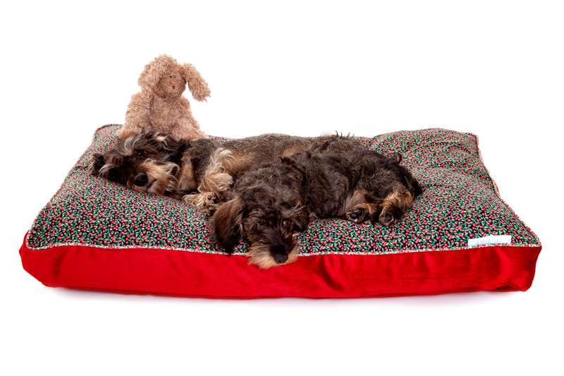 Doddington_Truly_Scrumptious_Boxy_Cushion_Dog_Bed_Lifestyle_Ottilie_Finnbar