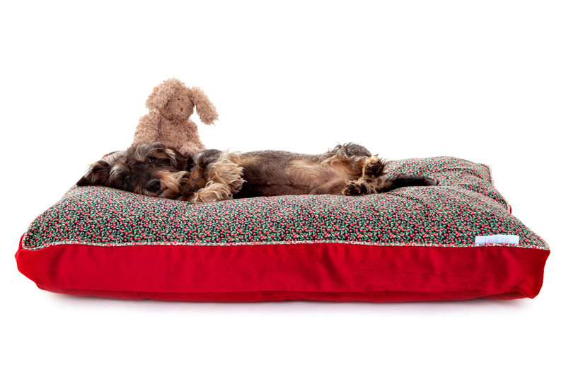 Doddington_Truly_Scrumptious_Boxy_Cushion_Dog_Bed_Lifestyle_Finnbar