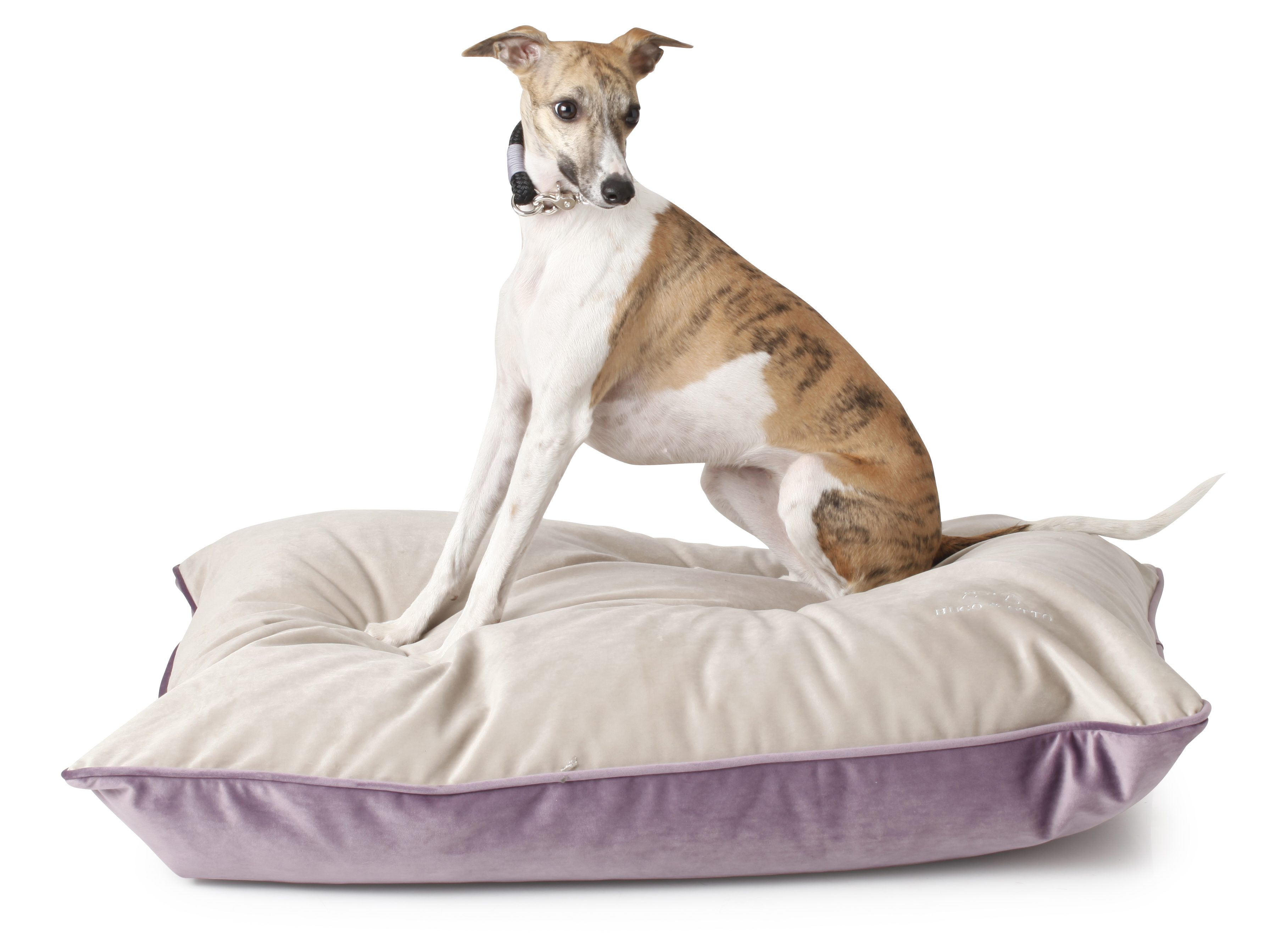 Louis Velour Cushion Dog Bed, Velour Dog Bed, Cushion, Dog Cushion, Cushion Dog Bed, Luxury Dog Cushion, Luxury Velour Dog Cushion, Louis, Louis Heather Dog Cushion, Italian Whippet, Cushions For Whippets, Luxury Dog Beds, Designer Dog Beds, Hugo & Otto Dog Bed, Hugo & Otto Dog Cushion,