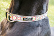 City Slicker Dog Collar - Bulls Eye