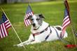 Americana Park Dog Leash-Stars