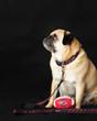 Collegiate - GameCocks06 Dog Collar Rep Pride Stripe