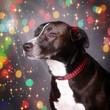 Wriggley's Fireside Dog Collar