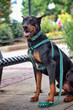 Prepster Rip Tie - Ivy League Green Harness - Sku 903