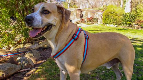 Prep School Dog Harness - Alex