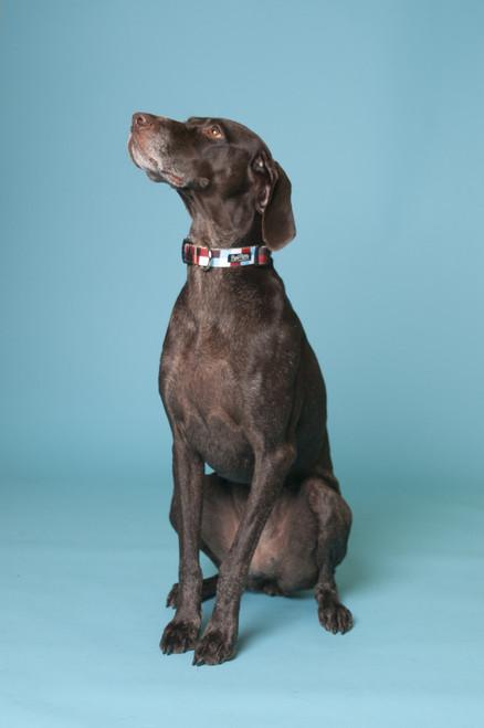 Hula Hoop Dog Collar - Hula Block on Tan