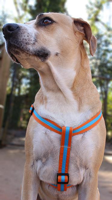 Prep School Dog Harness - Shep