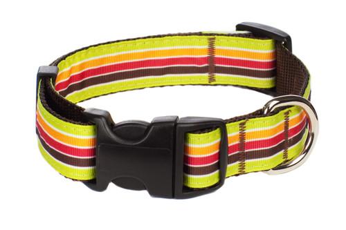 Margarita Mix Dog Collar - Mellow Yellow Stripe