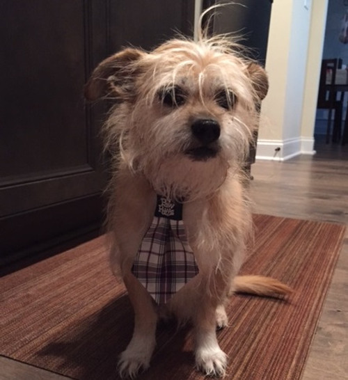 Dog Neck Ties - Navy Plaid