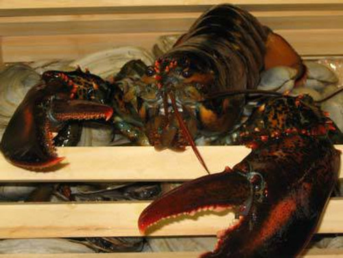 Lobster, Whole - Two-Pound