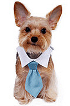 Blue Formal Neck Tie & Dog Collar