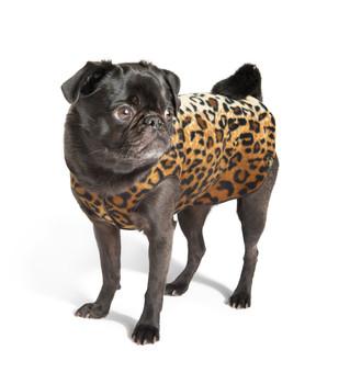 Gold Paw Stretch Fleece - Leopard