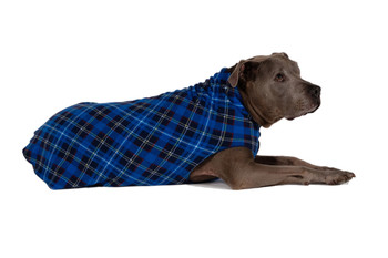 Gold Paw Stretch Fleece - Blue Plaid