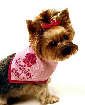 Birthday Girl Bandana Scarf in Pink