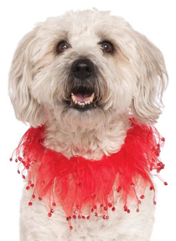 Red Fancy Pet Party Collar